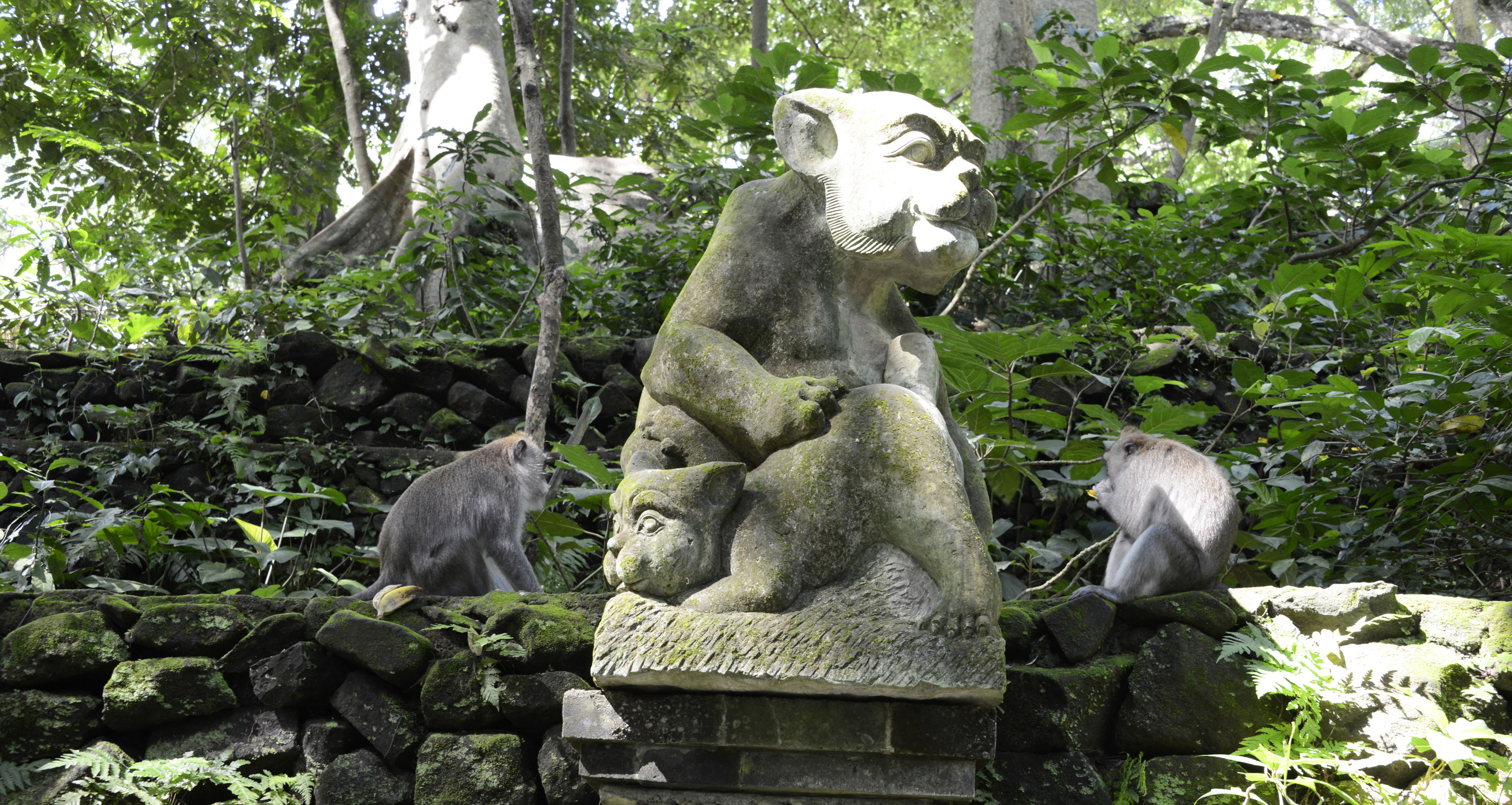 Sacred Monkey Forest Sanctuary, Ubud. © 2016 Resor och äventyr. All rights reserved.