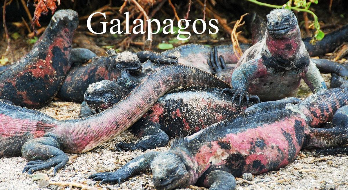 Galapagos © 2017 Resor och äventyr Guide till Galapagosöarna