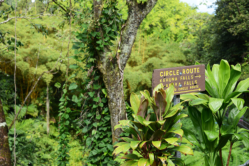 Big Island Hawaii © resorochaventyr.se Akaka Falls State Park