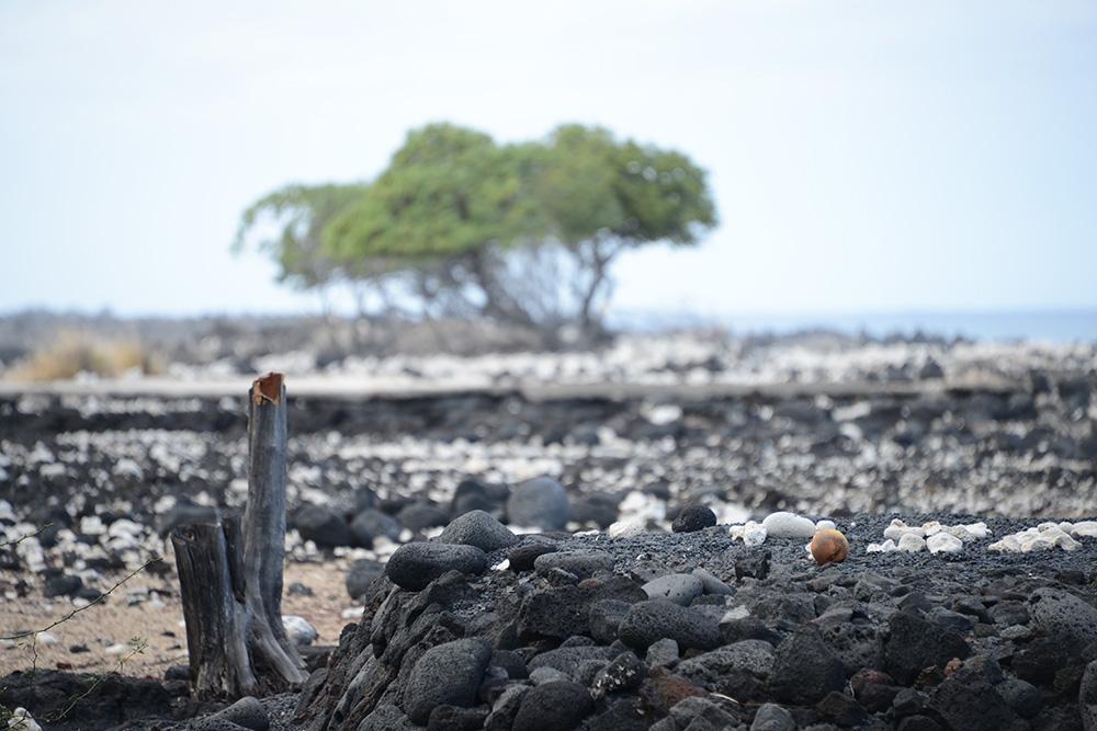Big Island Hawaii © resorochaventyr.se Kekaha Kai State Park