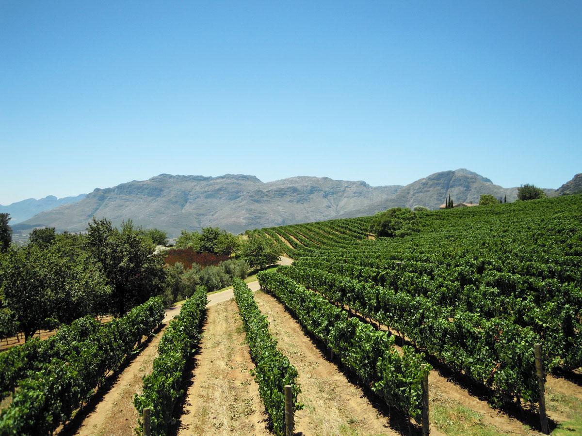 Sydafrika Stellenbosch Uva Mira Wineyard