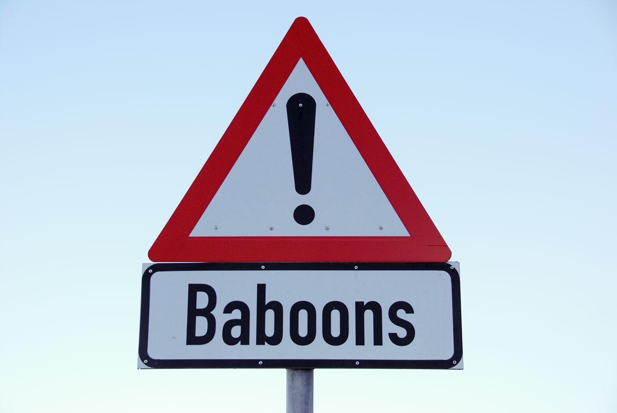 Sydafrika, Godahoppsudden, baboons