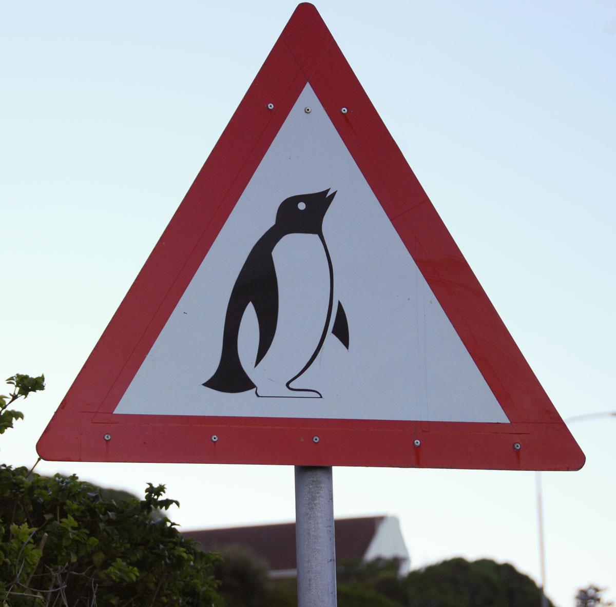 Sydafrika, pingvin