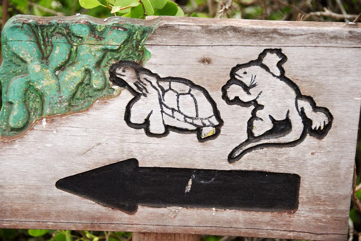 Galapagos, Isla Santa Cruz © 2017 Resor och äventyr