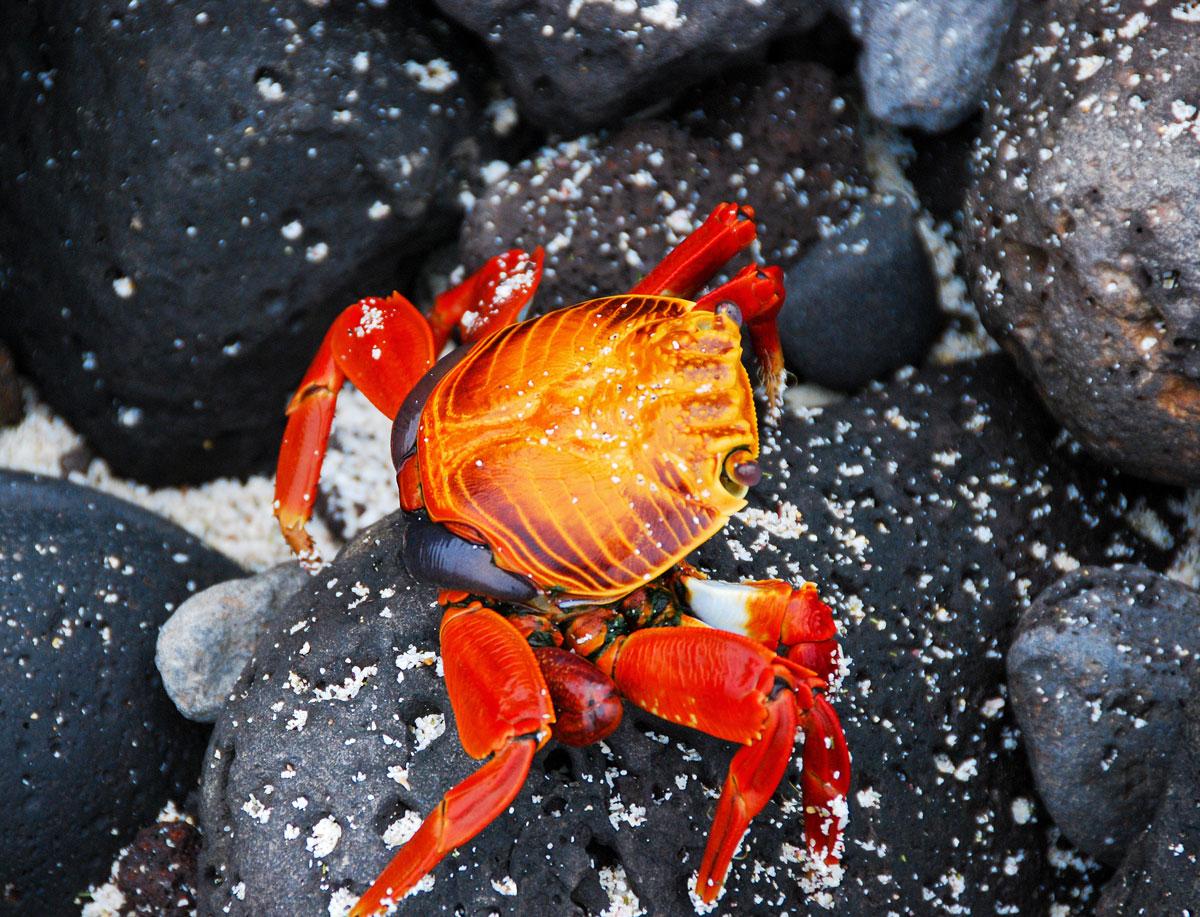 Galapagos, Santa Fé, Galapagosöarna djur resor © 2017 Resor och äventyr