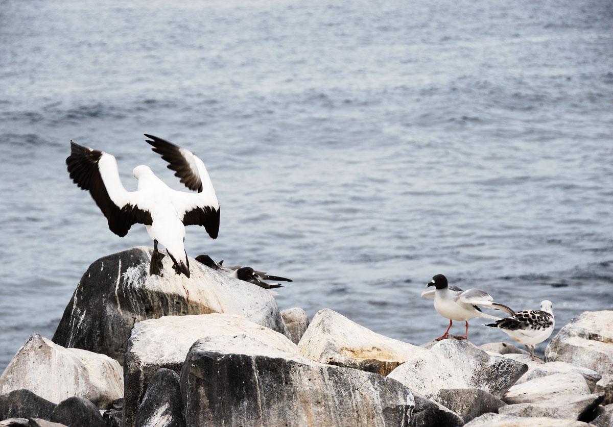 Galapagos, Espanola Galapagosöarna djur resor © 2017 Resor och äventyr