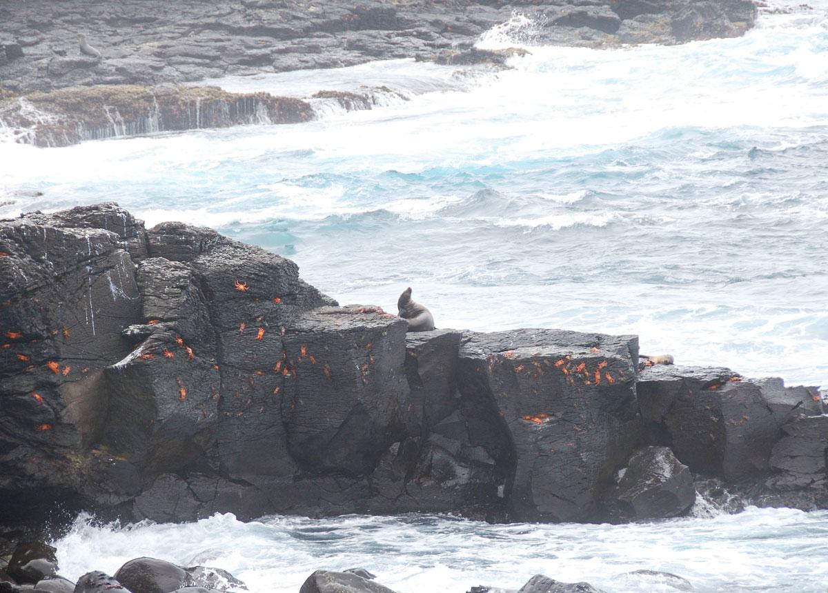 Galapagos djur fakta tips