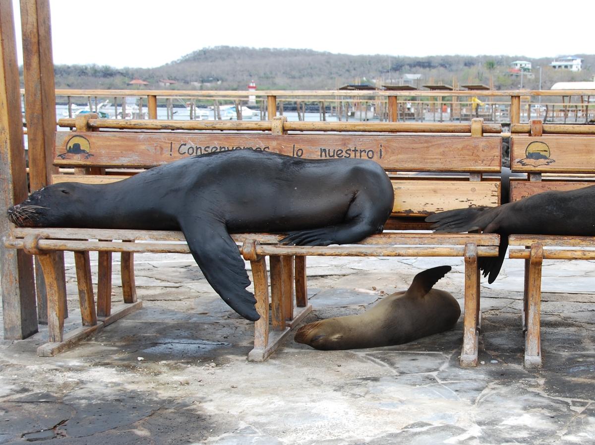 Galapagos, San Cristóbal, Galapagosöarna djur resor © 2017 Resor och äventyr