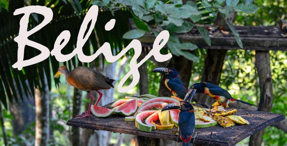 Belize San Pedro Ambergris Caye Cayo Mystic River Resort maya