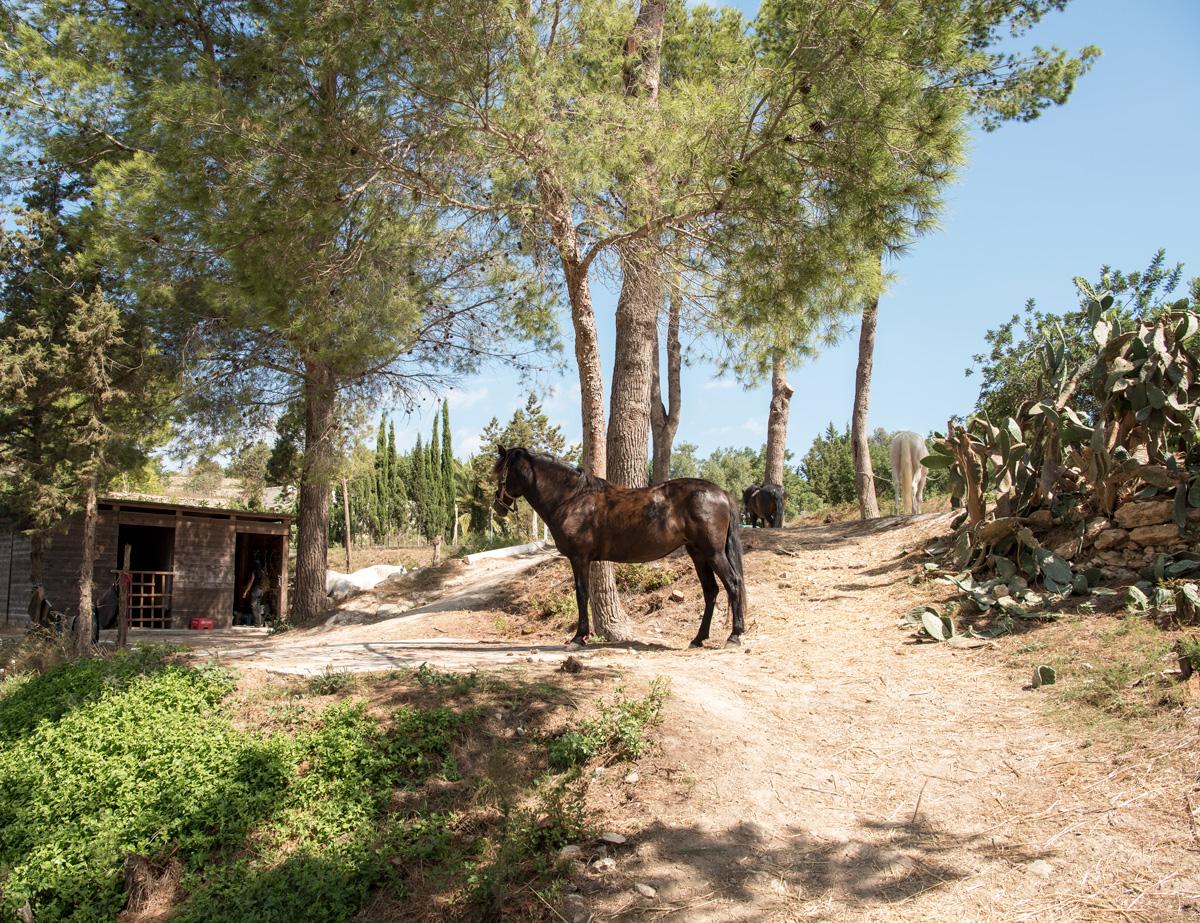 Ibiza, weekend guide, sevärdheter på Ibiza, hotell på Ibiza, restauranger på Ibiza, North Ride Ibiza