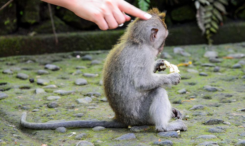 Bali tips Indonesia sacred monkey forest Nusa Dua Seminyak © www.resorochaventyr.se